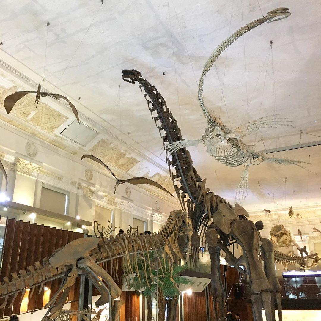 臺灣博物館 恐龍常設展