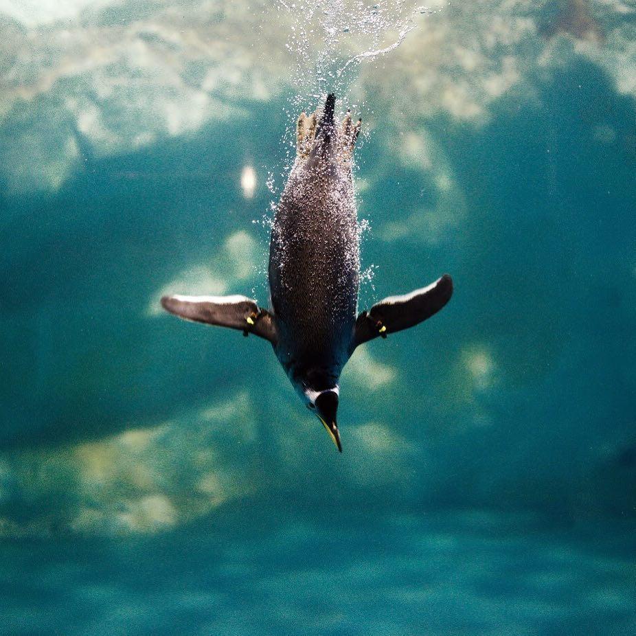 博物館推薦 海生館 企鵝
