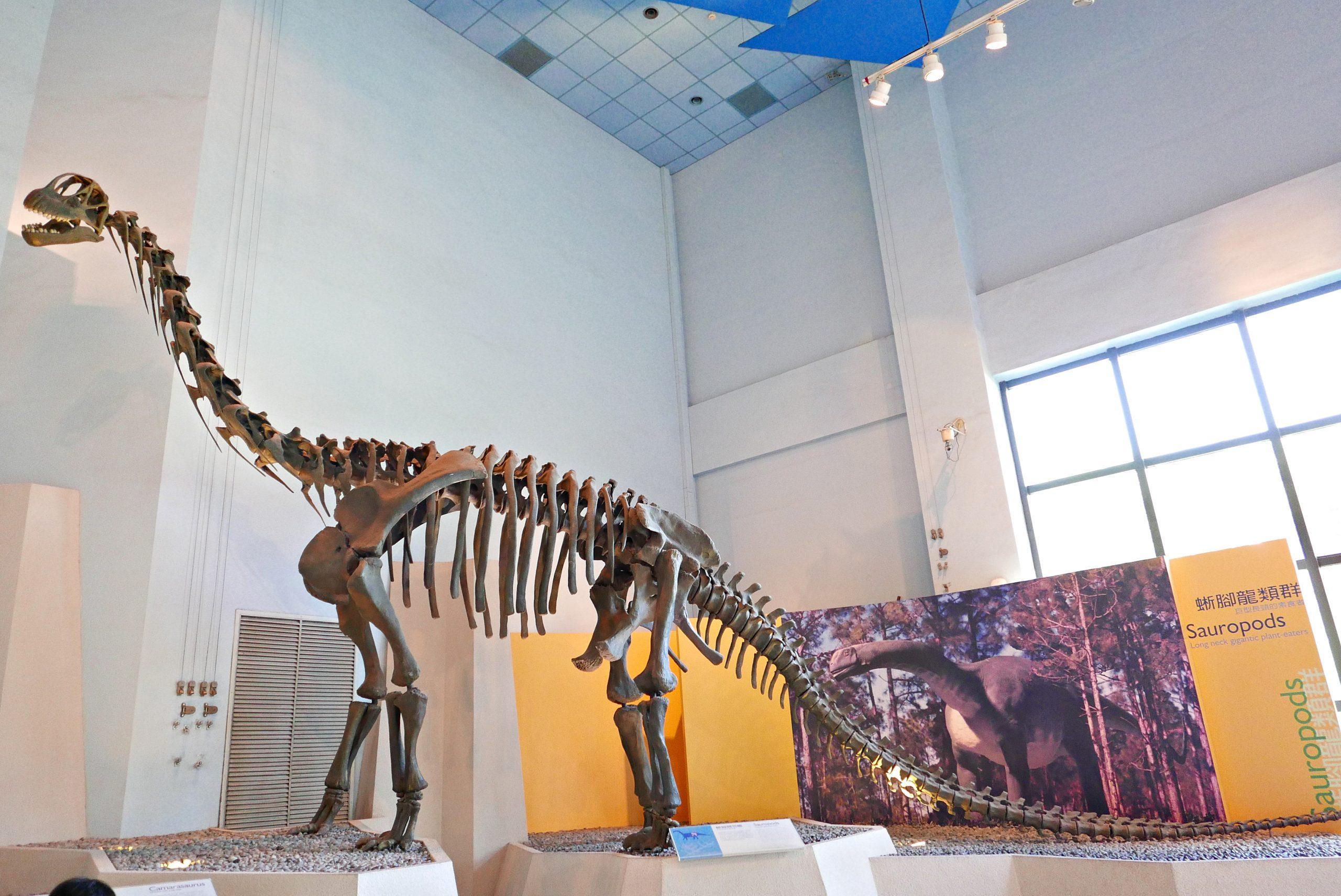 2020台中親子室內景點 台中科博館 恐龍廳