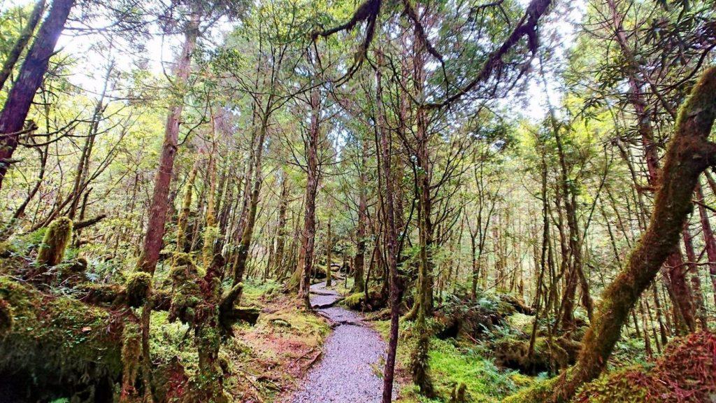 北部森林遊樂區推薦